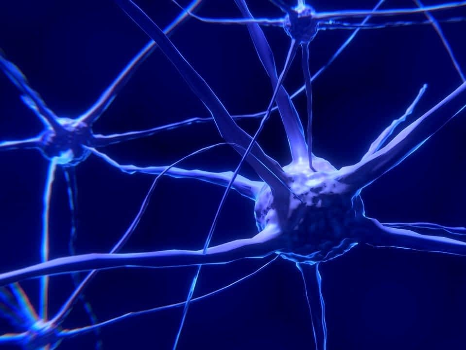 How anxiety affects memory, stress response